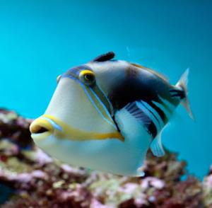 (Los peces viven en ambientes acuáticos)