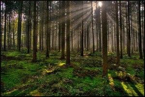 (En los bosques hay árboles de diferentes variedades, tipos y tamaños)