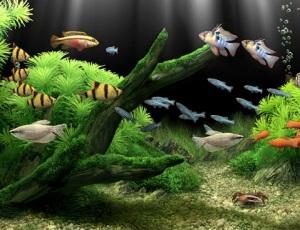 (El acuario es un ambiente artificial)