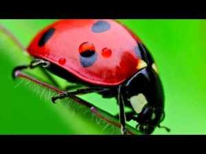 (Los insectos son invertebrados)