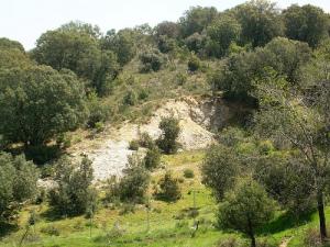 (La vegetación mediterránea se desarrolla en suelos áridos)