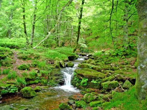La selva se caracteriza por su clima cálido y precipitaciones)
