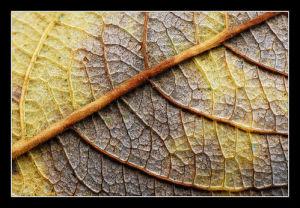 (Las texturas pueden ser naturales o artificiales)