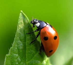 (Los insectos representan el 90% de vida sobre la tierra)