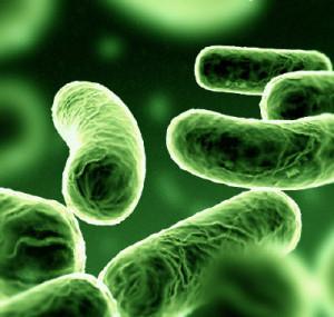 (Bacterias)