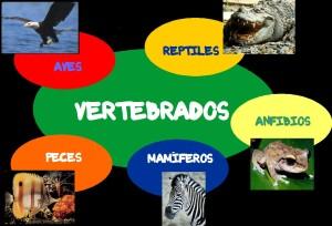 (Clasificación de los vertebrados)