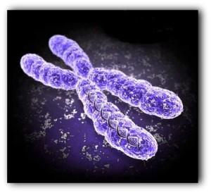 (Cromosomas. Ilustración)