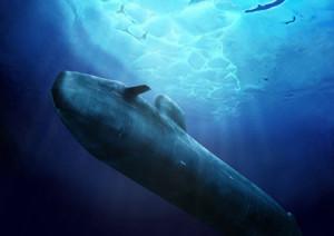 (El submarino navega debajo del agua)