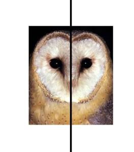 (Simetría bilateral)