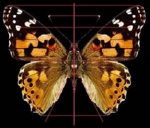 (Simetría en biología)