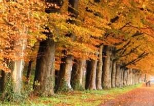 (Un bosque es una comunidad densamente poblada)